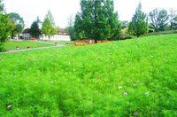 ドイツの森.jpgのサムネール画像のサムネール画像のサムネール画像